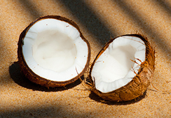 blog_coconut